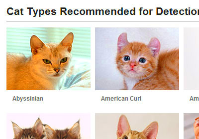 What kind of Cat can Fujifilm face detection detect ? | Justin.my