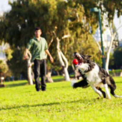 4 Tips for Engaging Your New Rescue Dog in Play - Lucky ...