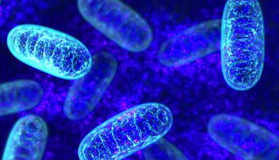 New rapid gene test for mitochondrial disease - Press ...