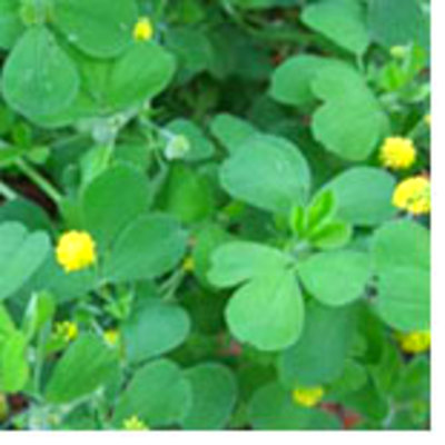 Common Lawn Problems and Solutions   Planet Natural