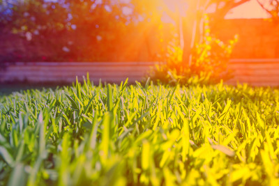How to Fix 9 Common Lawn Problems | Reader's Digest