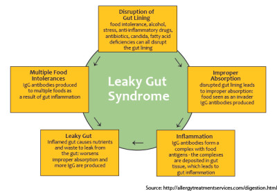 Leaky Gut: The Gluten-Lectin Connection - Shield ...