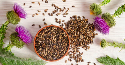 The Benefits Of Milk Thistle For Candida » The Candida Diet