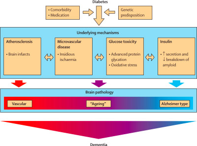 Risk of dementia in diabetes mellitus: a systematic review - The Lancet Neurology