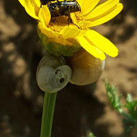 Bugs in a flower photo - default, centered cropping
