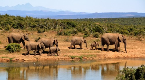 Scaled down elephants image to 500 pixels