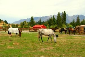 horses.jpg