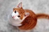 hungry_cat.jpg