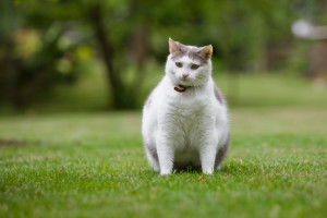 Uploaded fat cat photo