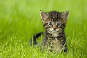Uploaded kitten photo