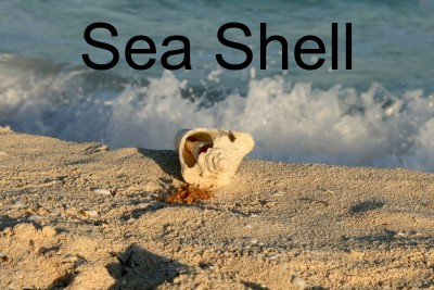 Sea shell photo with text overlay