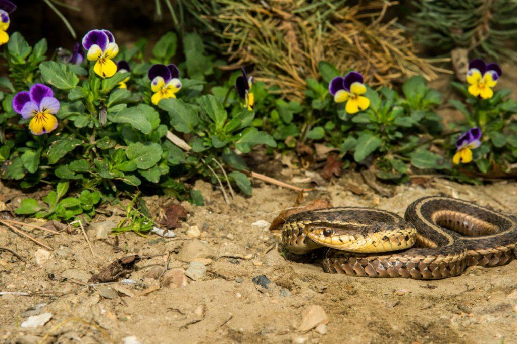Кого боятся змеи