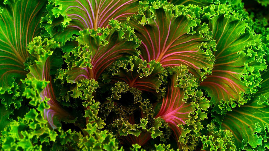 Close up of kale with red and green colors