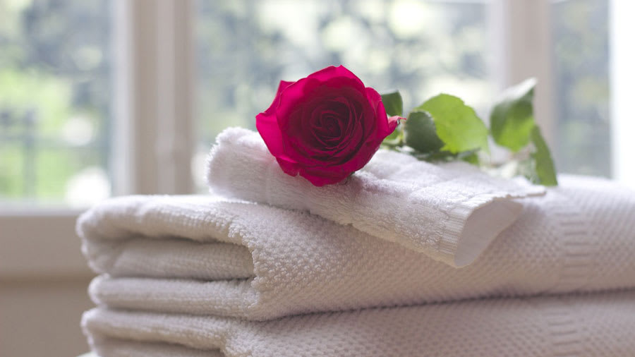 Red rose on folded white towel with window in the background