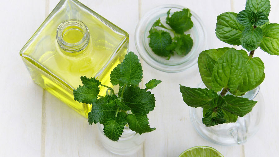 Non GMO skin care oils with mint plants growing near oil
