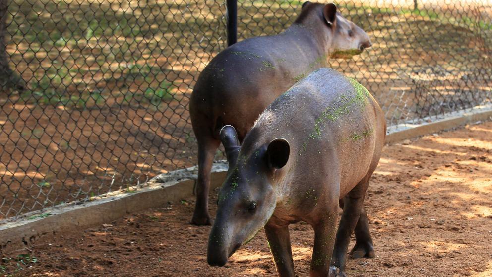 Las autoridades venezolanas están investigando el robo de animales de un zoológico en el estado occidental de Zulia.