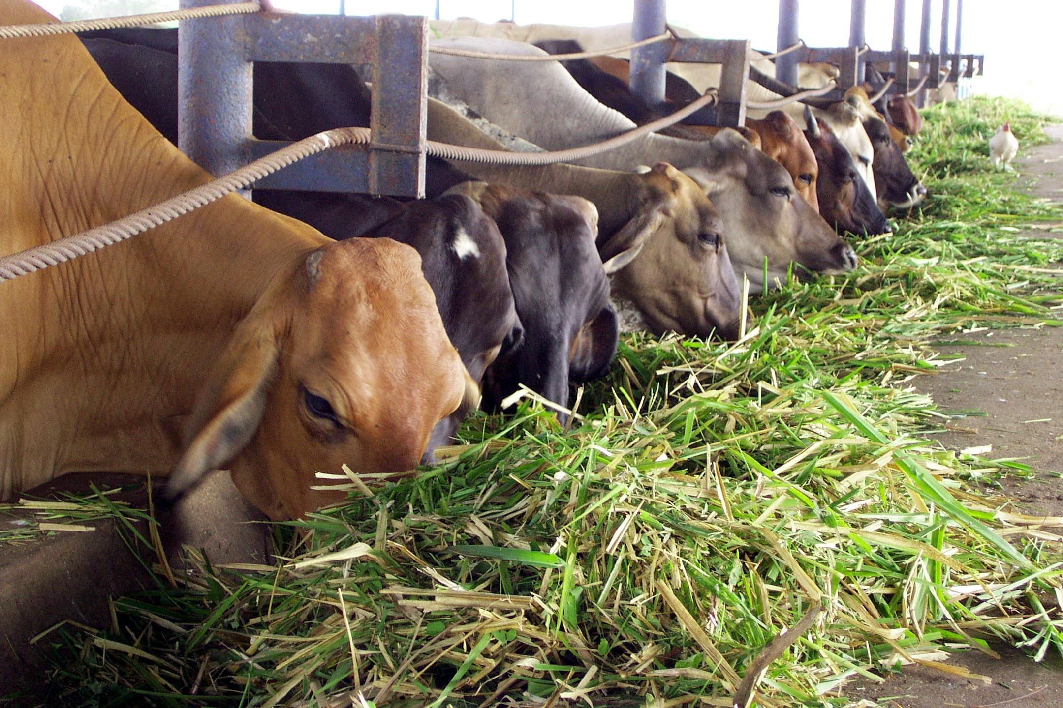 Atención de la Sanidad Animal en el área fronteriza Colombo-Venezolana