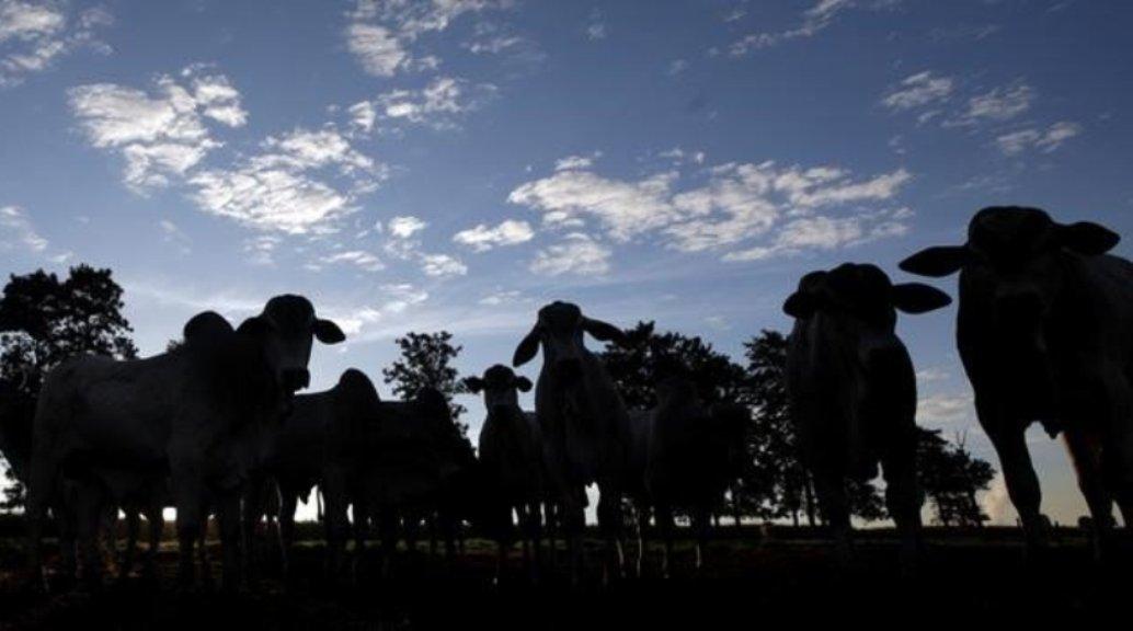 Colombia reporta control de fiebre aftosa en frontera con Venezuela.