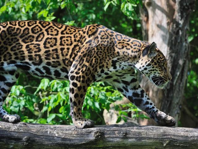 Los mejores países para los amantes de los animales