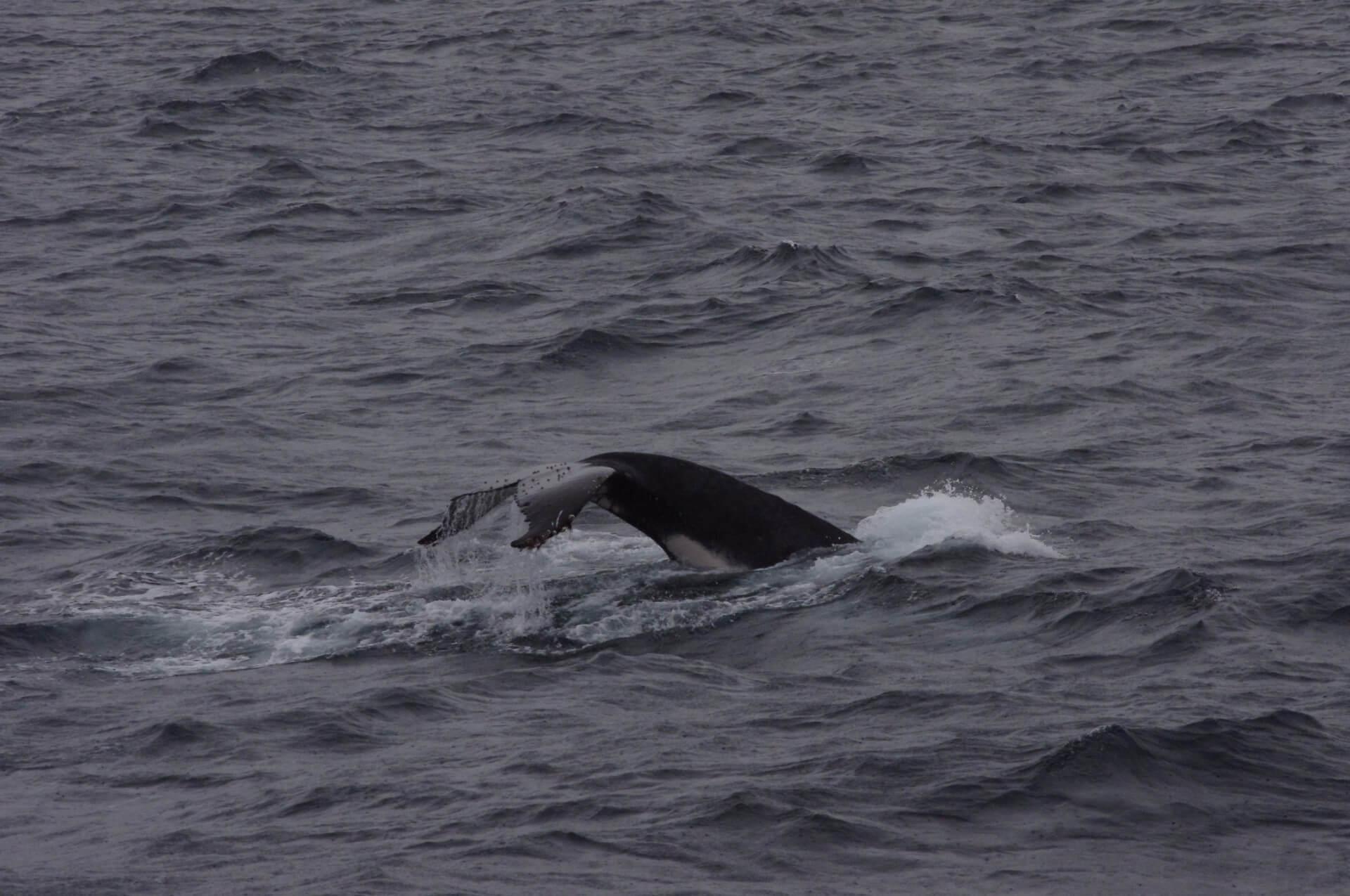 さらにクジラ発見