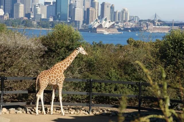 タロンガ動物園を散策開始