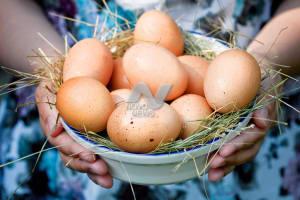 Впервые в Ульяновске пройдёт Фестиваль куриного яйца