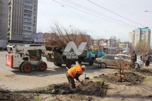 К Дню Победы в Ульяновске высадят более 2000 деревьев