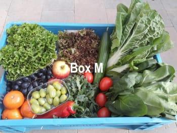 De Groene Schuur - Groente/Fruitbox medium