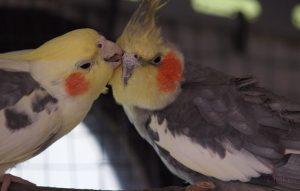 Попугаи что говорят