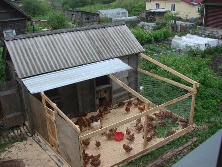 Куриный бизнес в домашних условиях