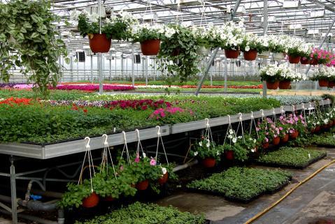 Цветы в теплицах на продажу