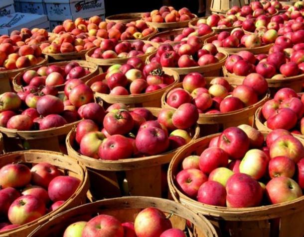 Я в праздник яблочного