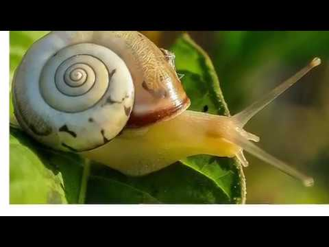 Do snails change their shells