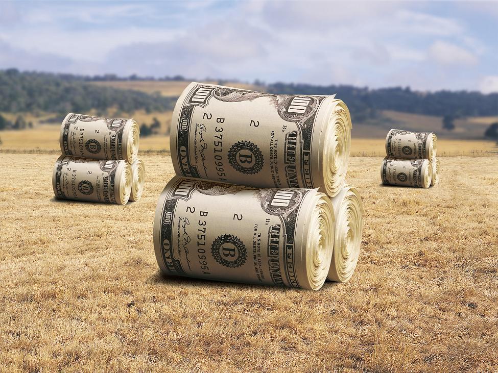 Бизнес сельское хозяйство с нуля