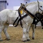 Красивые лошади, кони, скакуны, жеребята