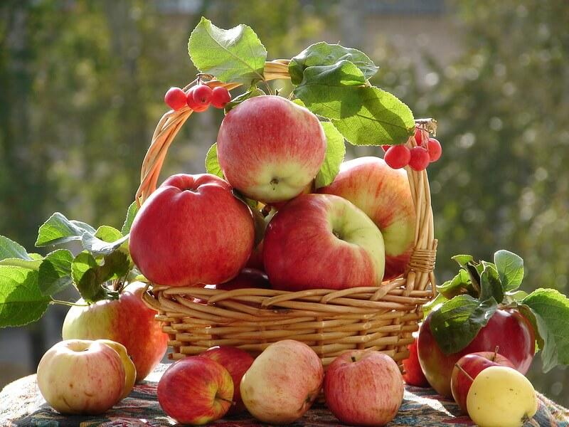 Бизнес по выращиванию яблок