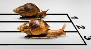 Best reef snails
