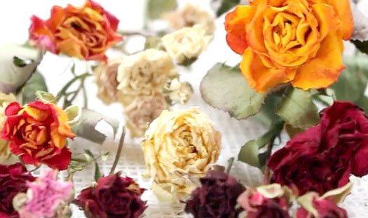 Как высушить розы в домашних условиях