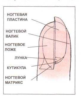 Комментарии к ногтям