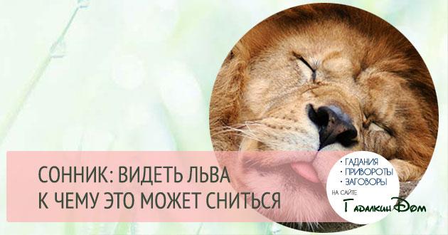 Значение сна лев