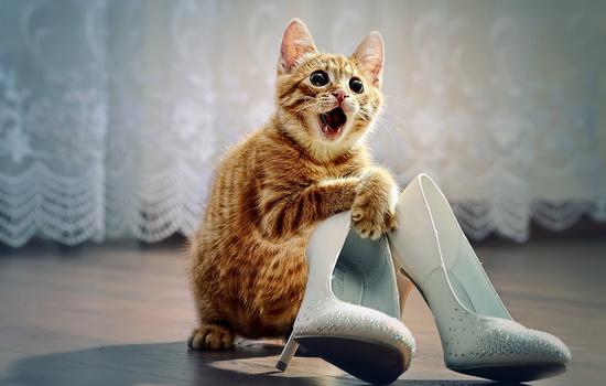 Как убрать кошачий запах в доме