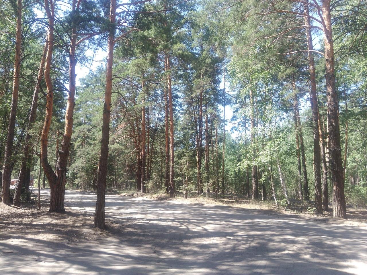 С огнем шутки плохи: в Курганской области ожидается 4 класс горимости леса
