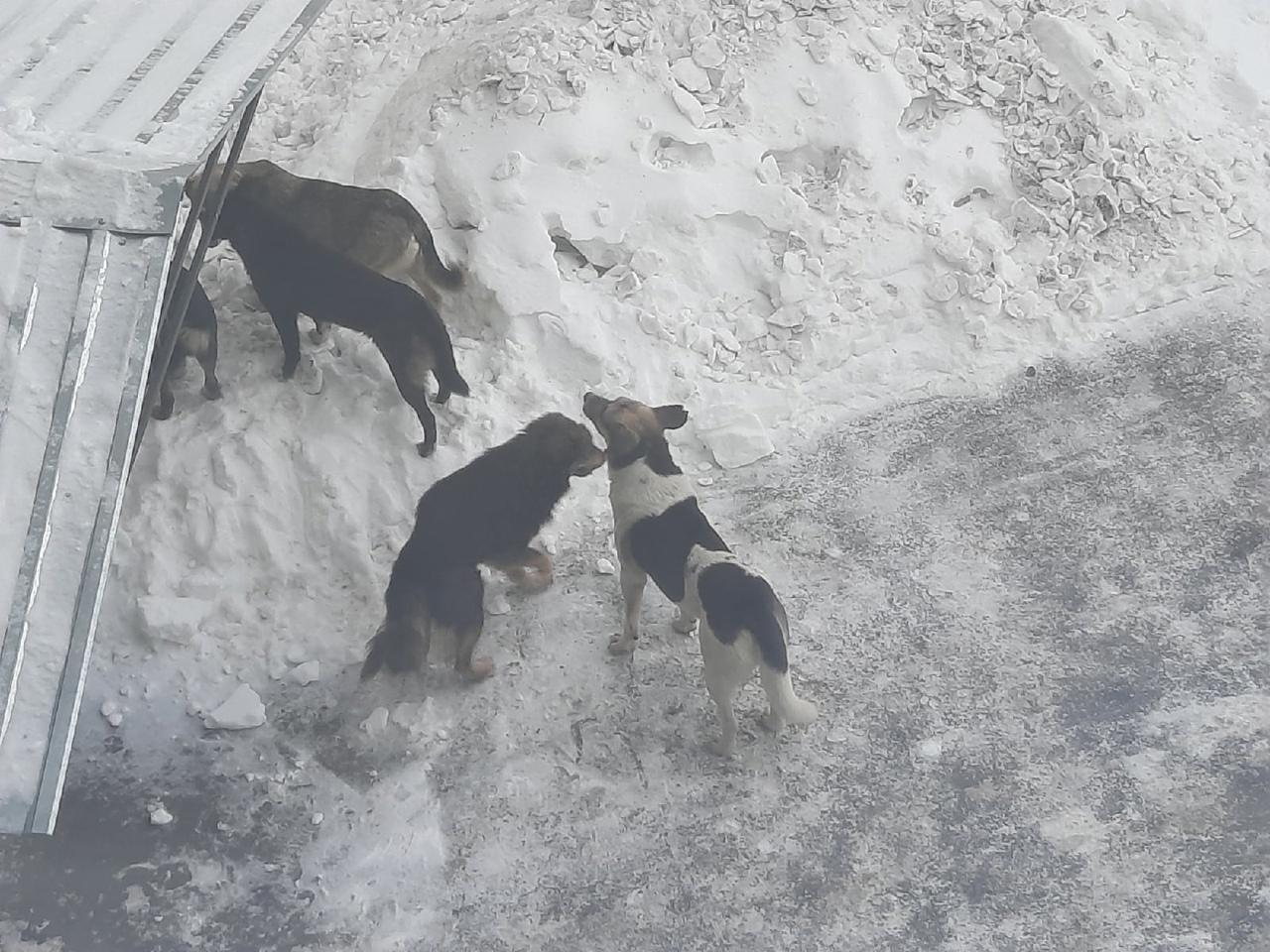 В Щучье собаки покусали ребенка: владельцев обязали выплатить моральный вред