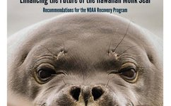 Monk seal conservation