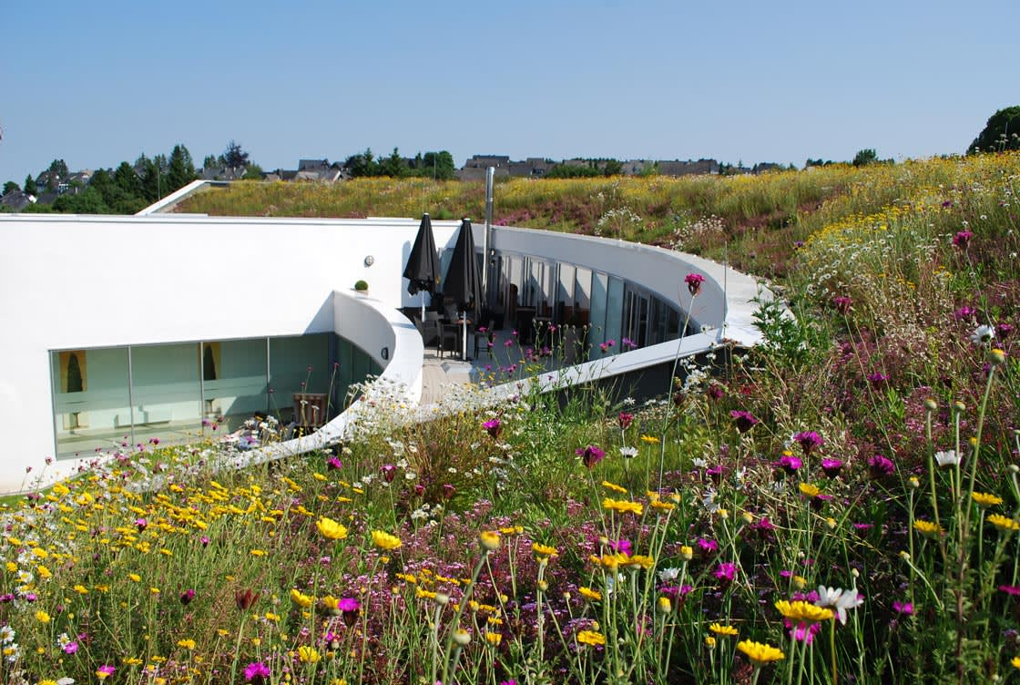 Greenroof with dianthus sp.
