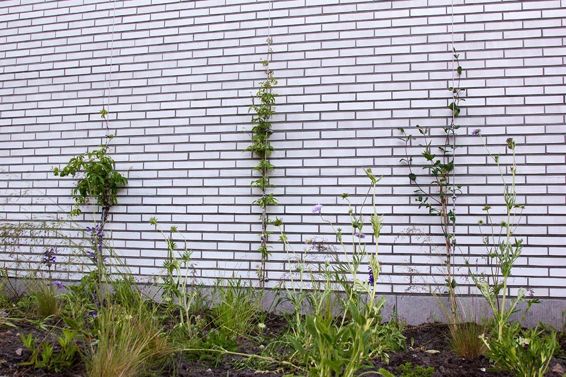Ugent_groengevel_klimplanten_03