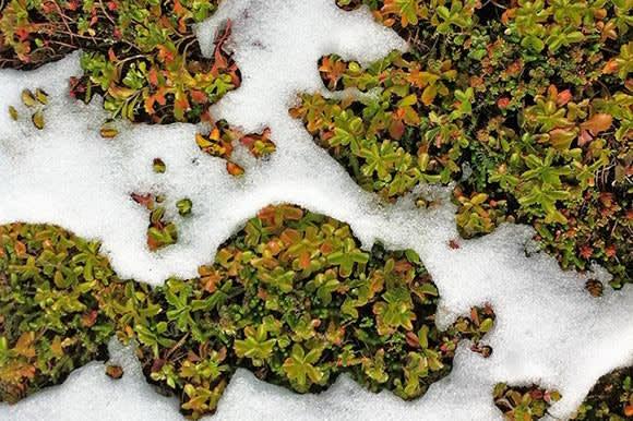 onderhoud-van-een-groendak-winter