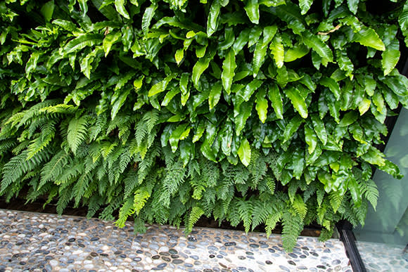 groengevel-megu-erpe-mere