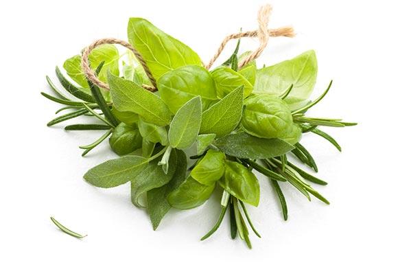 10-leuke-tuinkruiden-voor-op-je-groendak