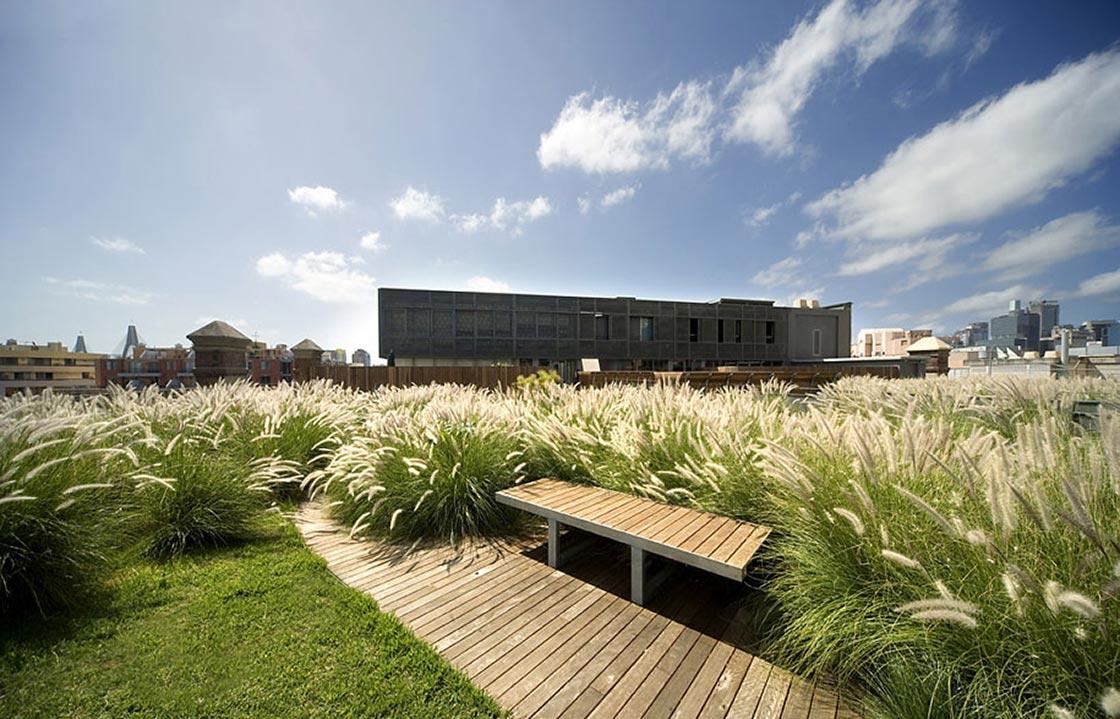 Siergrassen op het dak_project01